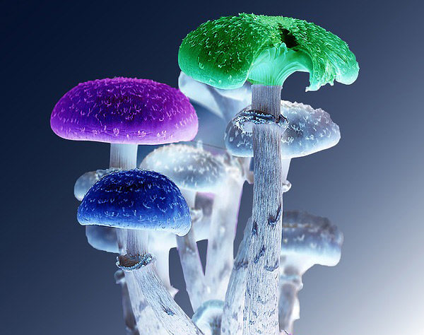 psychedelic mushroom trends 2020