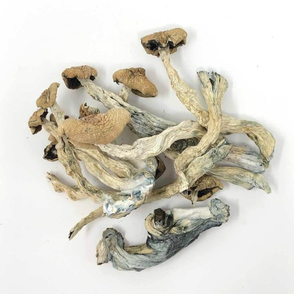 Magic Shrooms Online Buy Canada